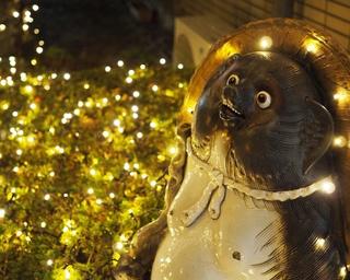 サンタ姿の大タヌキが可愛い!滋賀県甲賀市「しがらきイルミネーション2018」