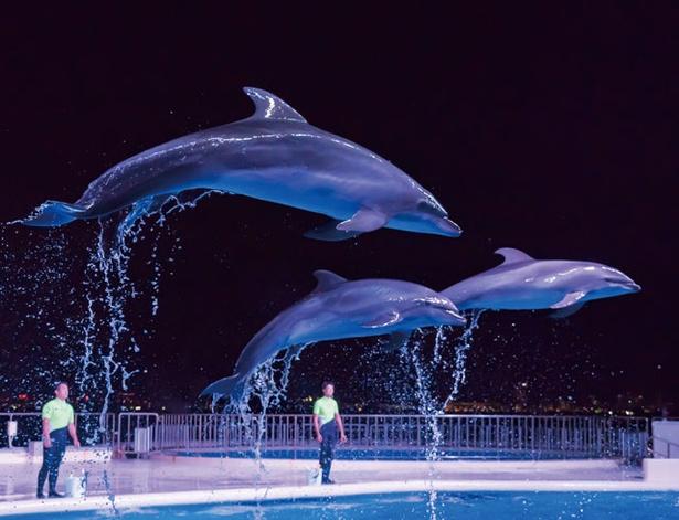 夜の海をバックに、昼間とは異なるライティングで行われるイルカショー