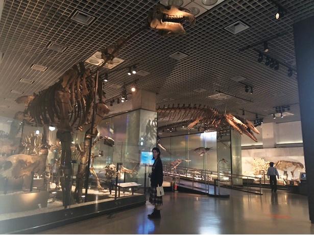 展示された恐竜骨格の前にたたずむ南沙良