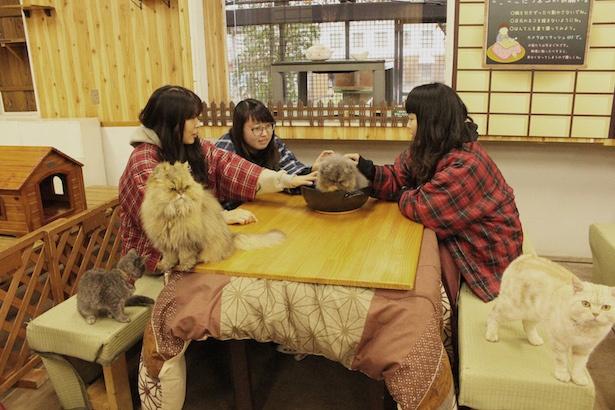 【写真を見る】ネコと小型犬のふれあい場「わんにゃんリビング」