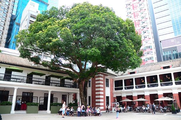 パレードグランドにある「マンゴーの木」は、警察官がその果実を食べれば昇進につながるという話も。平日の昼にはお年寄りが樹下に座りおしゃべりする、地元の憩いの場