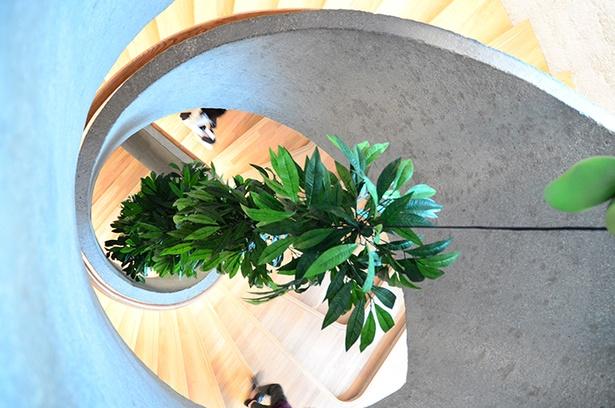 「JC Contemporary」にあるらせん階段。取材時は曹斐氏の作品が吊られていた