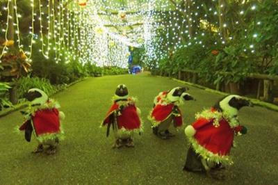 【写真を見る】光の通路をサンタ姿のペンギンがパレード
