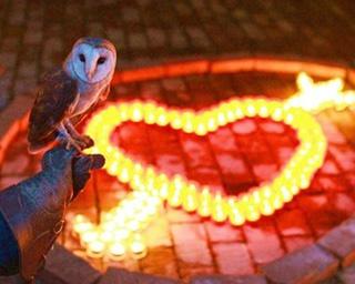 花と光と鳥たちが贈るクリスマスイベントが島根県で開催中