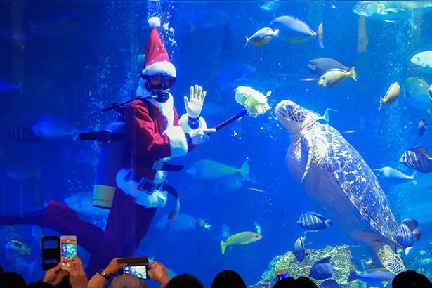 クリスマス期間中はサンタの恰好をしたダイバーによるエサやりも行われる