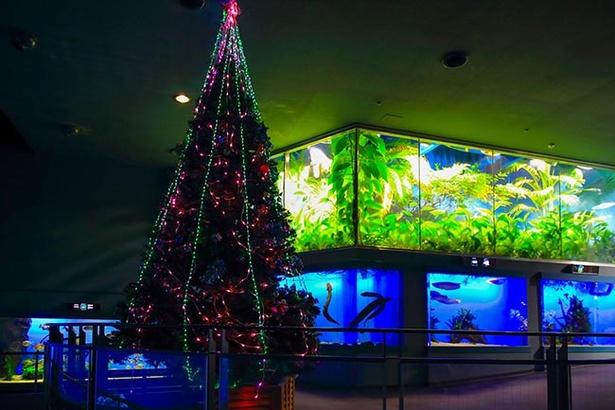 エントランスホールで輝く巨大デンキクラゲツリー