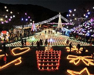 光が織り成す幻想的な光景!広島市植物公園で「花と光のページェント」開催中