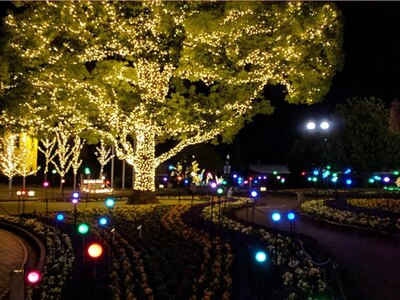 冬のデンパークに50万球の光が輝く/デンパーク ウィンターフェスティバル