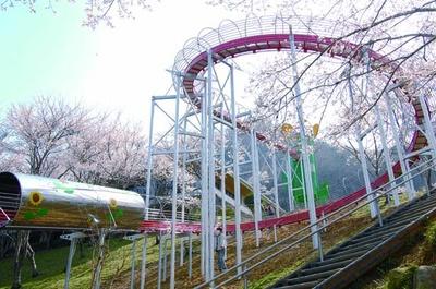 華やかなサクラが彩るスライダー/笹ヶ丘公園
