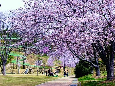 滑り台の近くには、大きなサクラの木がある/丸山総合公園