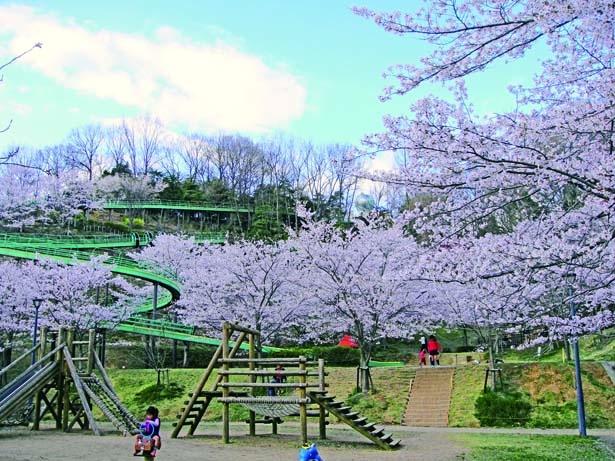 山頂から延びる2種のスライダー/丸山総合公園