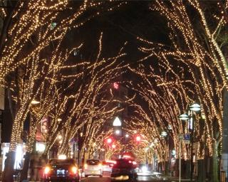 200本のケヤキが26万球の光で彩られる!新潟県新潟市「NIIGATA光のページェント」