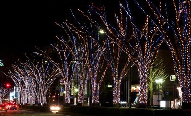 城址大通りの木々が光鮮やかに彩られる