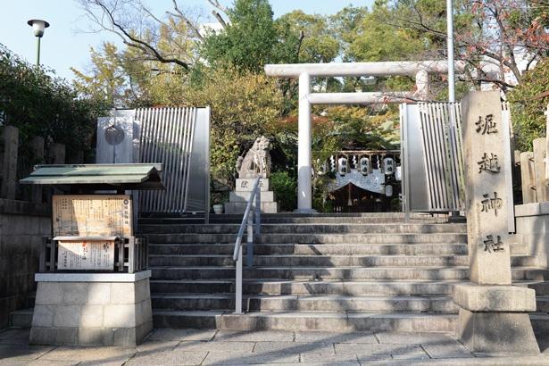 境内には御神木やかえる石などがある/堀越神社