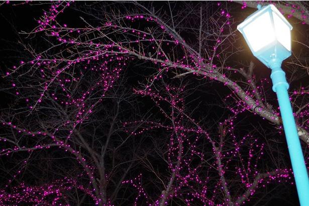 北の防人大湊安渡館、冬の夜を彩るイルミネーション