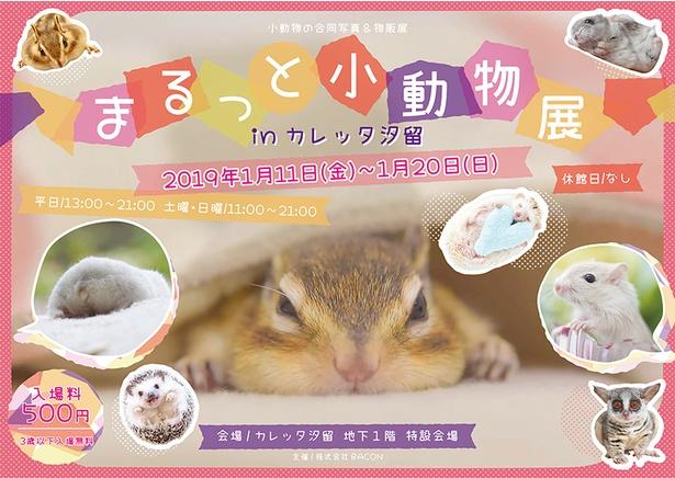 """カレッタ汐留に小動物が""""まるっ""""と集合!"""
