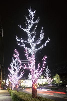 図書館通りの街路樹をライトアップ