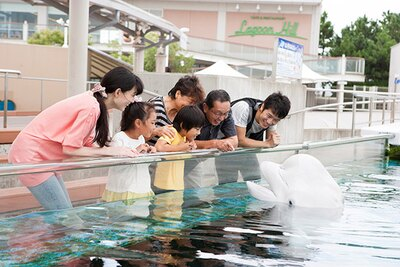 「横浜・八景島シーパラダイス」でキュートな海の動物たちと触れ合おう