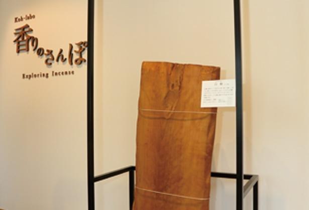 代表的な香木の一つ、白檀(びゃくだん)の大木を展示/松榮堂 薫習館