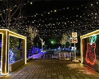 光り輝く幻想的な世界!青森県平川市「ひらかわイルミネーションプロムナード」