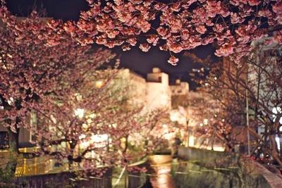 毎日行われる「あたみ桜」のライトアップ風景も素敵