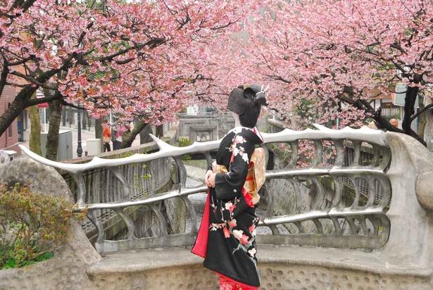 【写真を見る】桜まつりには、あたみ温泉の芸者衆も訪れる