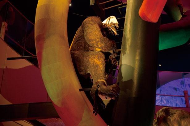 ゴリラは朽ちた部分を修繕せず、万博閉会後の歳月を感じられるようにしている。哺乳類時代に展示/太陽の塔