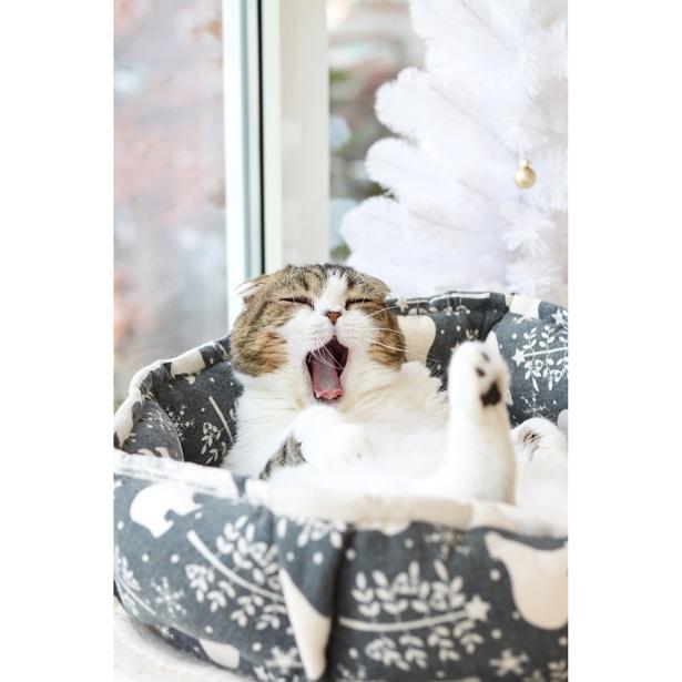 【写真を見る】かわいすぎる、あくび顔ショット!なかなか見られないネコたちの表情にも注目