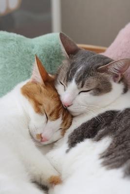 寄り添って眠る2匹がかわいすぎる…!