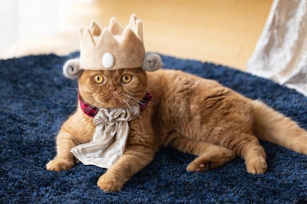 抜け毛で作られた帽子を被って、王様に変身!