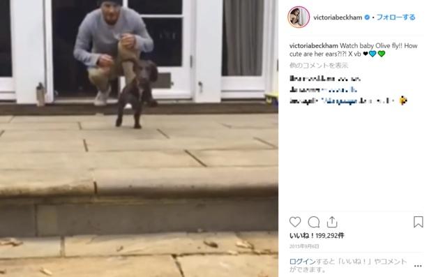 過去には愛犬とニコニコ戯れるデイヴィッドの動画も投稿されている