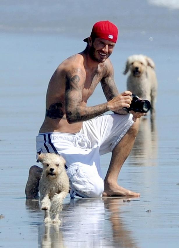 デイヴィッドに愛されている犬がちょっとした羨望の的に