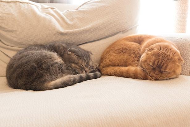 おそろいのポーズで、ぐっすりお昼寝