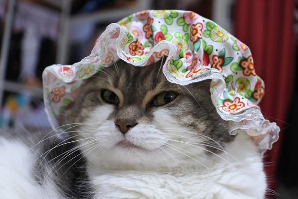 お気に入りの帽子を被って、このドヤ顔