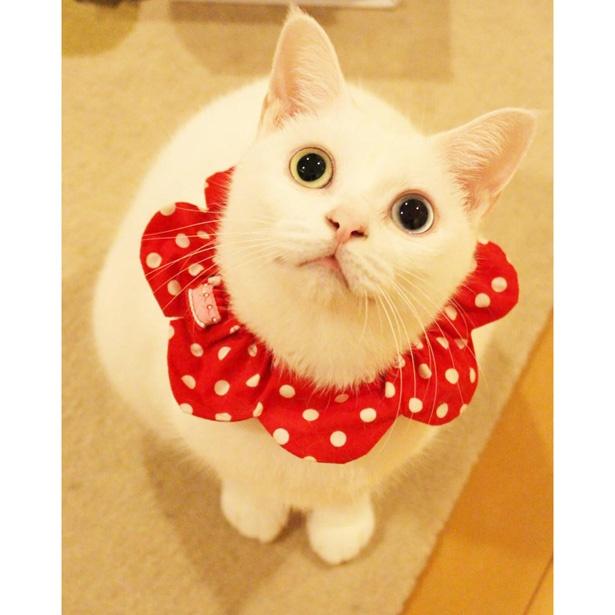 【写真を見る】まるでザビエル!?ネコの日にワークショップで作れる首輪がこちら