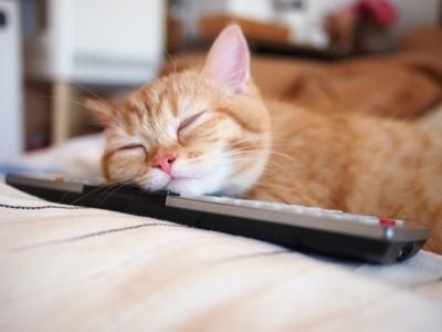 【写真を見る】リモコンを枕にして眠る「プリンちゃん」