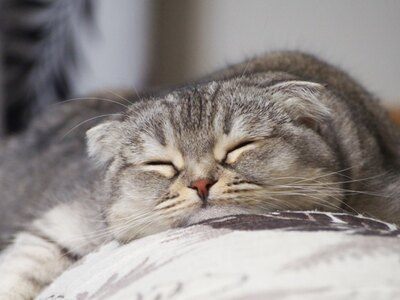 ぐでーっと寝ころぶ「つぶまろ」