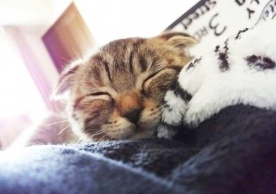 微笑んでいるかのような寝顔がキュート!「てんちゃん」