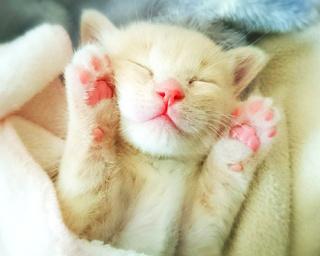 """ネコたちの""""寝顔""""を集めた展覧会が名古屋で開催!キュートすぎる写真をちょい見せ!!"""