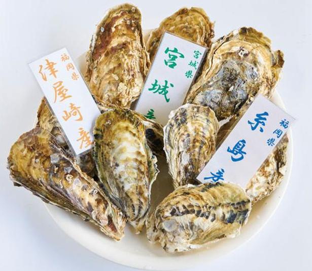 カキ小屋inベイサイド / 「牡蠣食べ比べ」(¥2160)。五島産(1月末~)や津屋崎産など日替り3種類が並ぶ(写真の産地は一例)