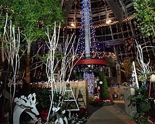 暖かな温室で楽しめる!福井県総合グリーンセンターで「花の展示温室イルミネーション」開催中