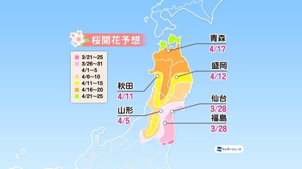 東北地方の桜開花予想(情報は2021年3月24日発表  ウェザーニューズ)