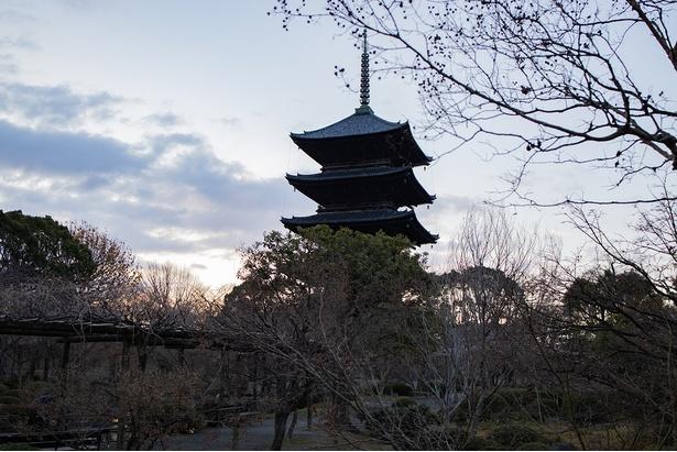 朝を迎えた国宝・五重塔
