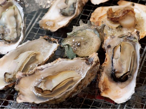 のぶりん / 今季登場した「牡蠣ご膳」の1,500円コース。カニグラタンなど5品が入る