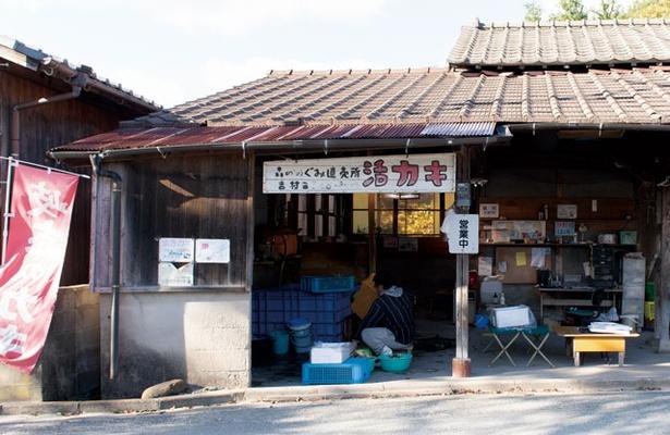 よしむらカキ直売所 / 糸島カキ生産の先駆者!