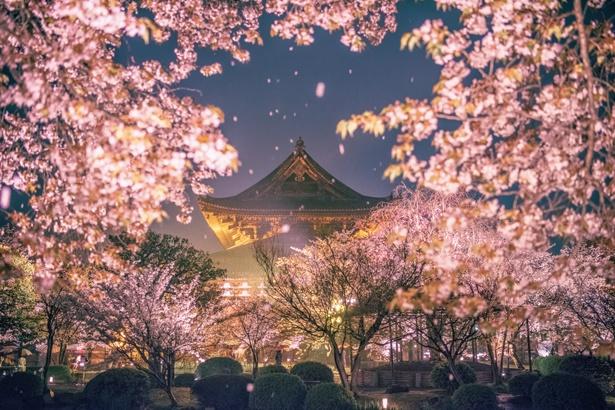 平成最後のお花見を楽しめる「関西の絶景桜」特集