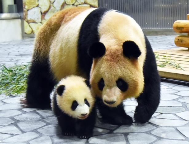 和歌山にパンダを見に行こう!
