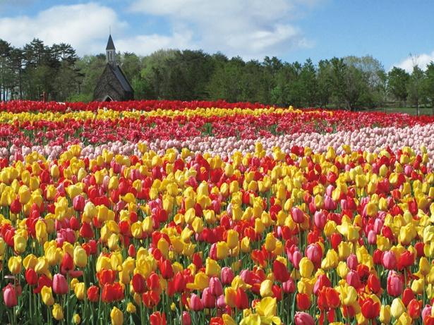 春のお出かけで行きたい、花絶景