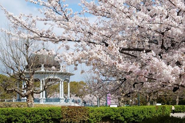 ポカポカの春の陽気の中、鶴舞公園(@tsuruma_park)を散策♪