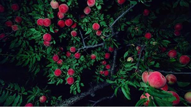 生と死の国の境に植えられていた桃の木をモチーフに、人間の運命について思考を深める新たなシリーズ